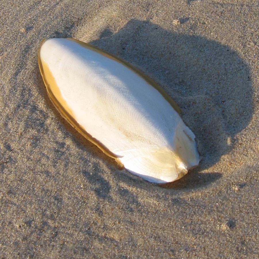 Zeeschuim - strandvond...